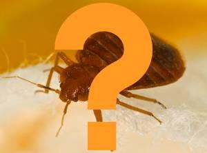 Bed Bug Q&A