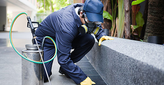 What to Look For In a Pest Control Company before Hiring Them for Your Business