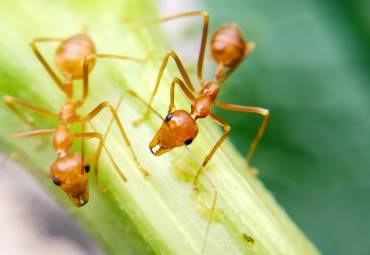 Fire Ant Bites And What To Do