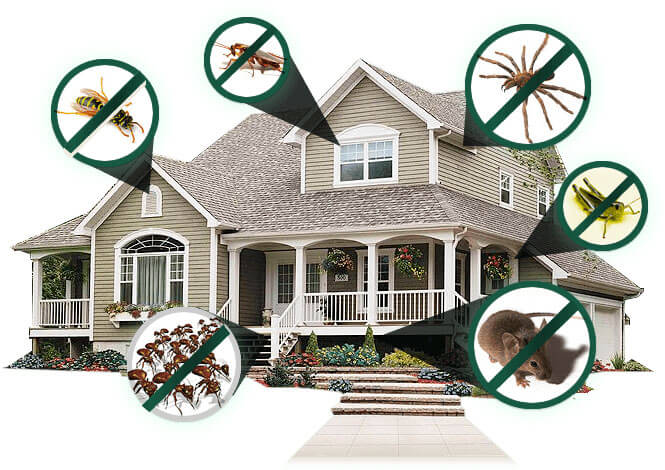 4 Big Benefits of Residential Pest Control