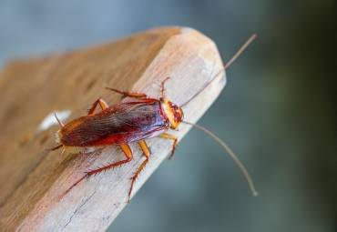 What to do incase of a cockroach infestation